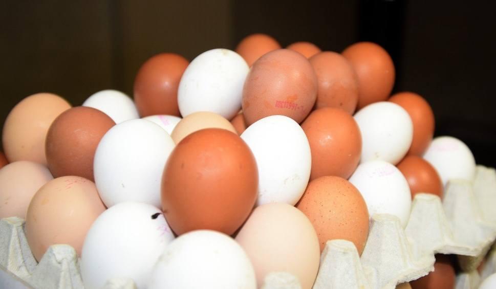 Film do artykułu: GIS ostrzega: Salmonella w Biedronce. Groźna bakteria znaleziona na skorupkach jajek. GIS wycofuje towar