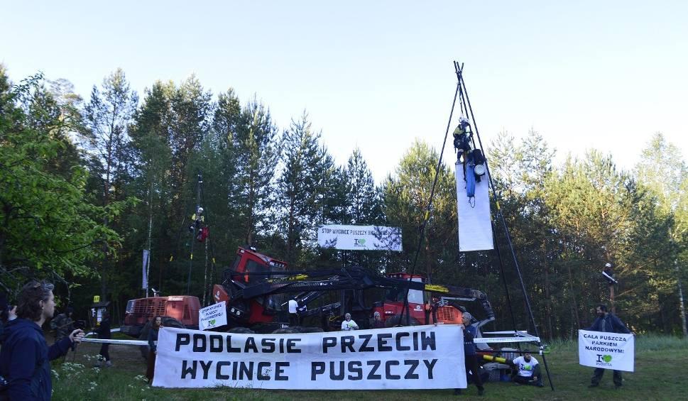 Film do artykułu: Rzuciła kaskiem w ekologa broniącego Puszczy Białowieskiej przed wycinką. Zapadł wyrok [WIDEO]