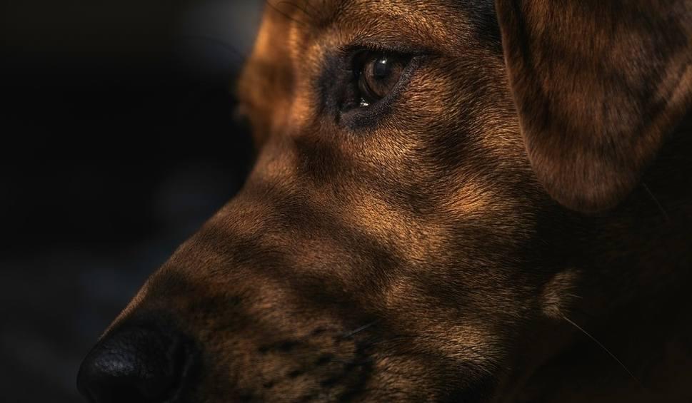 Film do artykułu: Na Wilczaku w Bydgoszczy mężczyzna bije psa - nagranie trafiło do sieci [wideo]