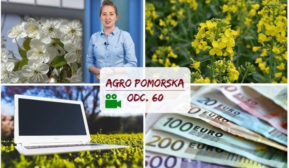 Film do artykułu: Agro Pomorska odcinek 60. Kończy się czas na wnioski o dopłaty, mija 15 lat w UE [wideo]