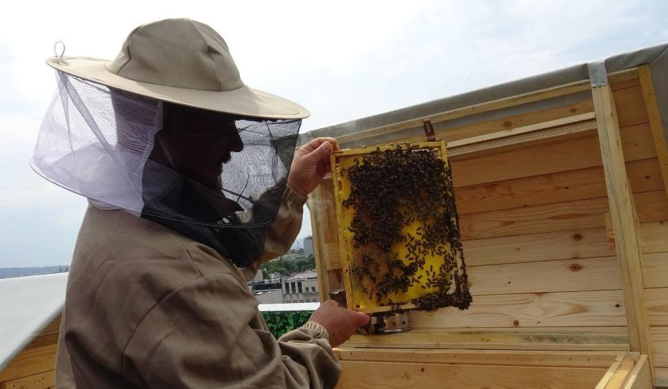 Film do artykułu: Czy miód z dachu Galerii Rzeszów będzie w sprzedaży? Na to i wiele innych pytań odpowiadają pszczelarze Rafał i Maciej Szela