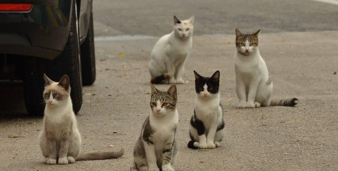 Koty często pojawiają się w miejscach, gdzie unoszą się zapachy jedzenia.