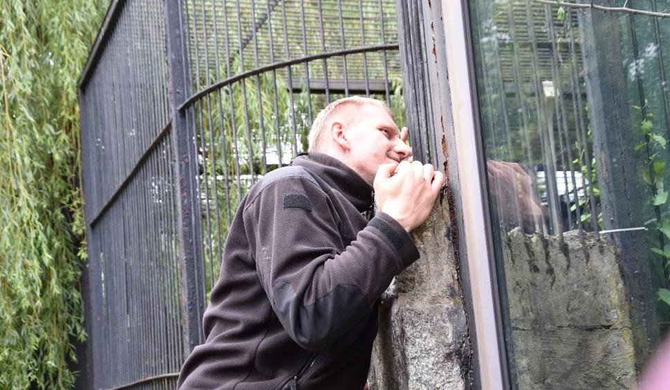 Film do artykułu: Puma z Jury trafiła do Śląskiego Ogrodu Zoologicznego. Właściciel: Będę o nią walczył