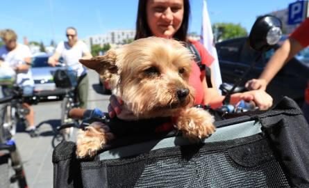 Toruń walczy o zwycięstwo w European Cycling Challenge. W sobotę mocno poprawił swój wynik, dzięki przejazdowi torunian na Barbarkę.  Kolumna ruszyła