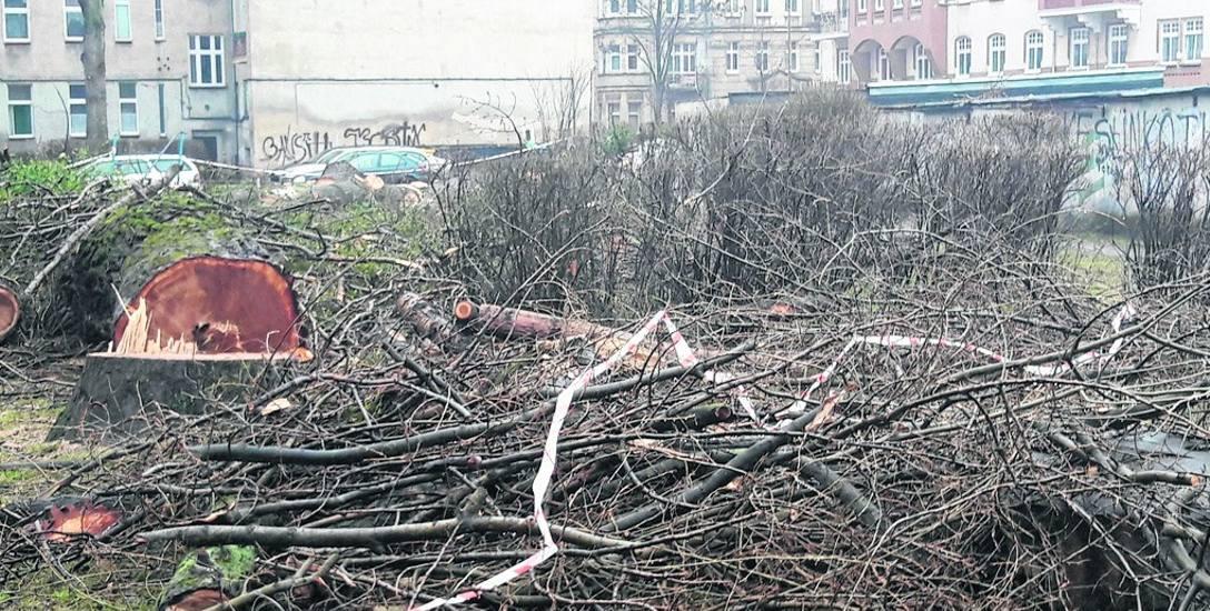 Wycinka drzew na podwórzu w kwartale ulic: Reja, Nowowiejska, Piastowska, Sienkiewicza we Wrocławiu. Czy naprawdę bez zieleni mieszkańcom będzie się