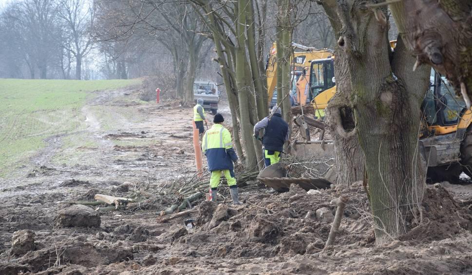 Film do artykułu: Szykana na drodze może ocalić wiele drzew przed bzdurną wycinką [ZDJĘCIA]