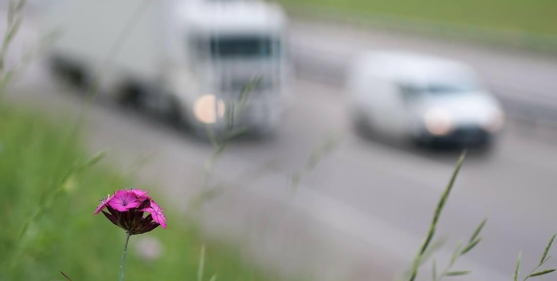 [QUIZ] Co wiesz o zanieczyszczeniu powietrza?