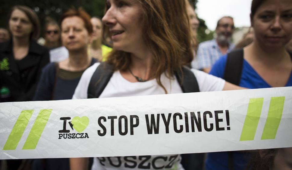 Film do artykułu: Rzecznik Trybunału Sprawiedliwości UE: Wycinka drzew w Puszczy Białowieskiej niezgodna z prawem. Kornika drukarz nie może być uzasadnieniem
