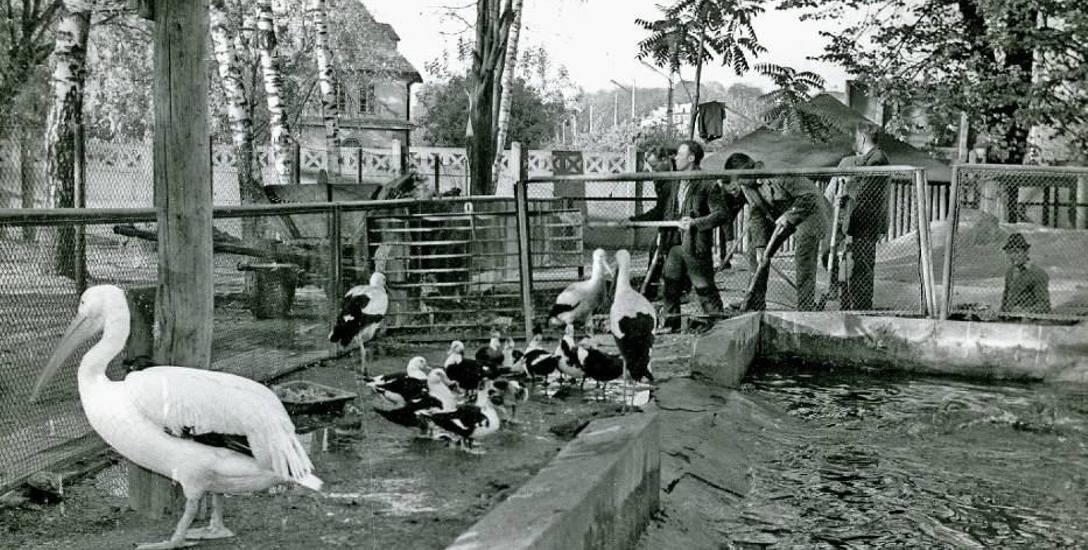 Do 80 r. zoo mieściło się na działce przylegającej do gmachu szkoły i kościoła