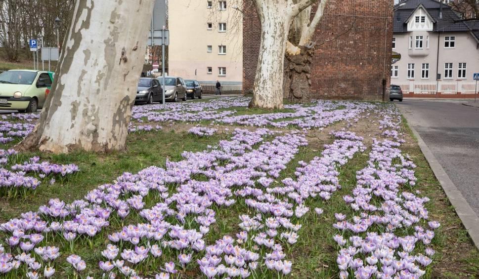 Film do artykułu: POGODA w Szczecinie i regionie. W marcu jak w garncu, czyli trochę słońca, trochę deszczu