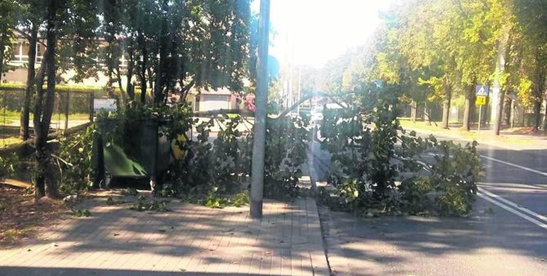 Gałąź upadła na pojemniki na śmieci, chodnik oraz jezdnię.
