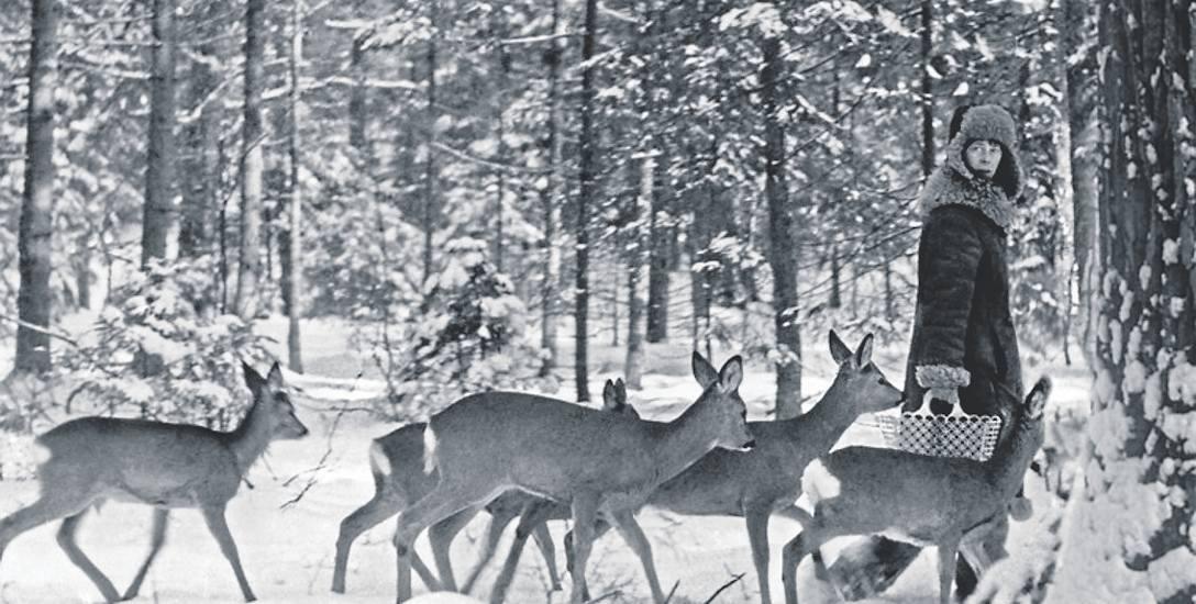 Simona Kossak ze zwięrzętami w puszczy