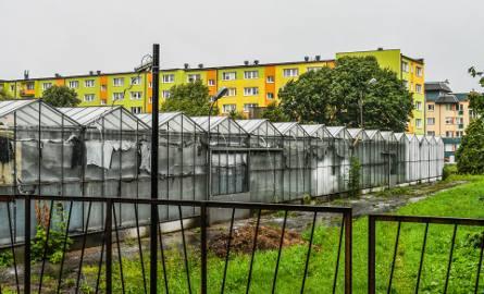 """Siedziba """"Zieleni Miejskiej"""" przy ul. Czarna Droga to szklarnie i plac, na który spółka może - zgodnie z zezwoleniem zwozić prawie wszystkie odpady komunalne,"""