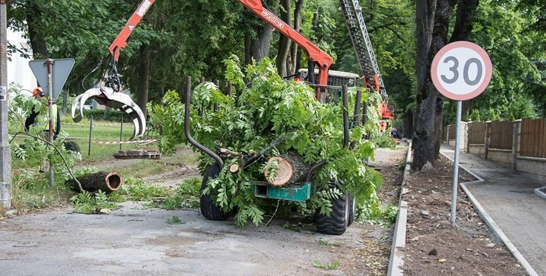 Puszcza Białowieska. Ekolodzy chcą wstrzymać wycinkę