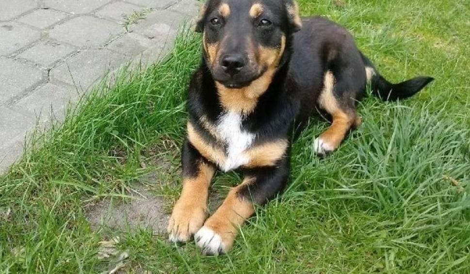 Film do artykułu: Pies dokazywał w ogródku więc wywiózł go do innej gminy i zostawił przy drodze w okolicach Kamiennej Woli