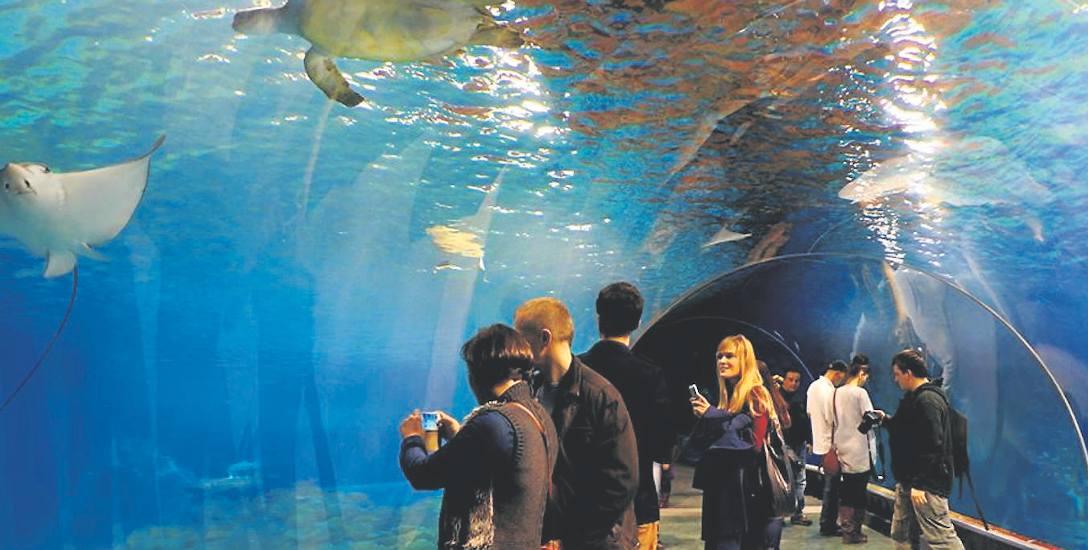 Oceanarium we Wrocławiu, które miała okazję obejrzeć część radnych z Kołobrzegu