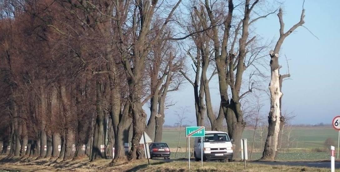 Ponad 10 mln zł kosztować ma przebudowa tzw. alei lipowej na drodze wojewódzkiej 414 w okolicach Prudnika.