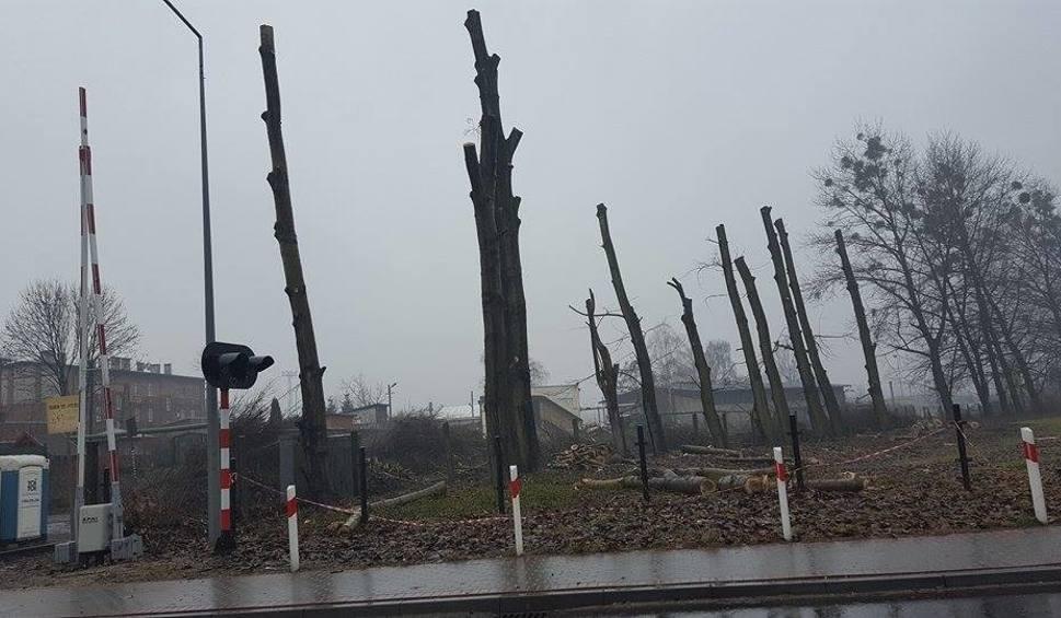 Film do artykułu: Rybnik: Wycinają wielkie drzewa - żalą się mieszkańcy [ZDJĘCIA]