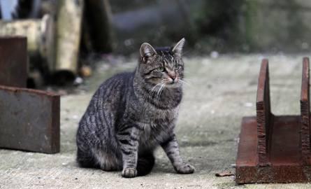 Dwieście kotów na terenie gdyńskich stoczni potrzebuje naszej pomocy. Trwa zbiórka pieniędzy, aby miały co jeść. Wolontariusze zachęcają też do ich adopcji