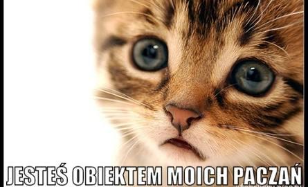 Te koty rozczulają i rozśmieszają do łez. Jesteś fanem kotów? Te memy są dla ciebie [26.01.21]