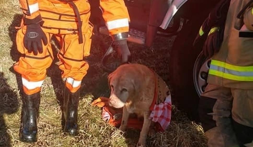 Film do artykułu: Strażacy z OSP Łeba uratowali tonącego psa z kanału Chełst [wideo,zdjęcia]