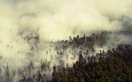 26 sierpnia 2016 mija 24. rocznica wybuchu pożaru stulecia w lasach Kuźni Raciborskiej