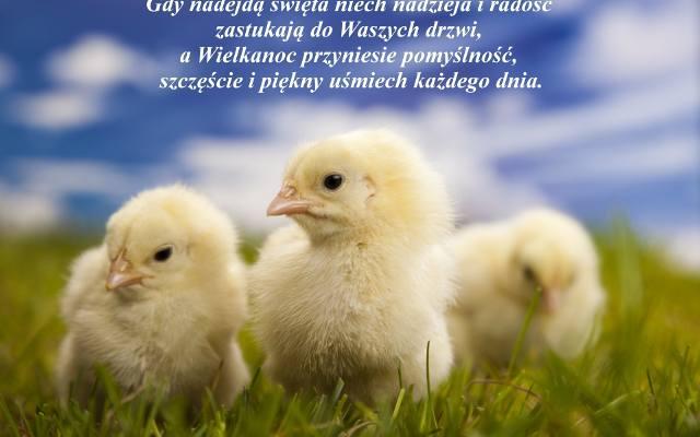 Wierszyki Wielkanoc Wspolczesnapl