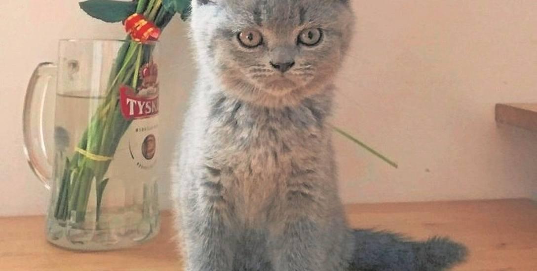 Po kotku Maćku pozostały wspomnienia i kilka fotografii. Był tak chory, że weterynarz nie widział szans na uratowanie jego życia