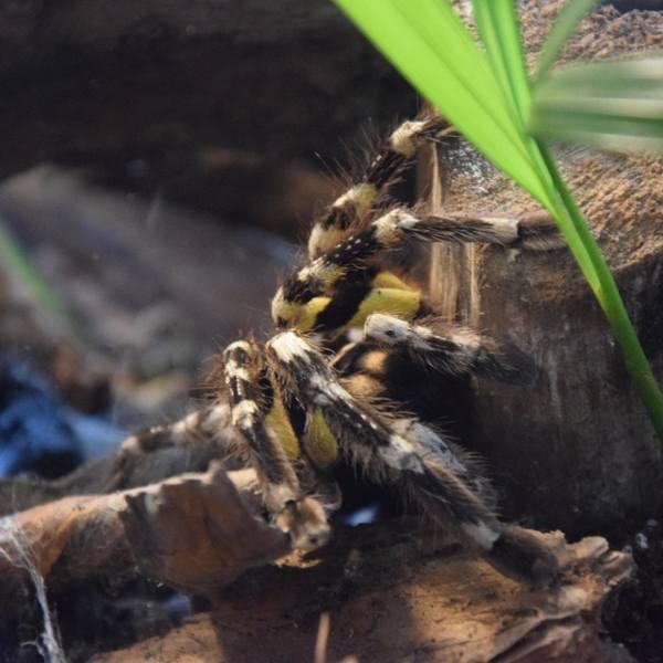 Wystawa pająków i skorpionów w Rzeszowskim Domu Kultury na Słocinie [ZDJĘCIA]