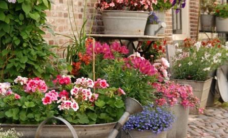 Różne stare naczynia i pojemniki warto wykorzystać do posadzenia kwiatów. Dzięki temu nasz ogród lub balkon zyska bardzo oryginalny wystrój.