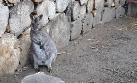Zwierzęta znajdują się w Betlejemskim Ogrodzie Biblijnym we Wspólnocie Betlejem w Jaworznie