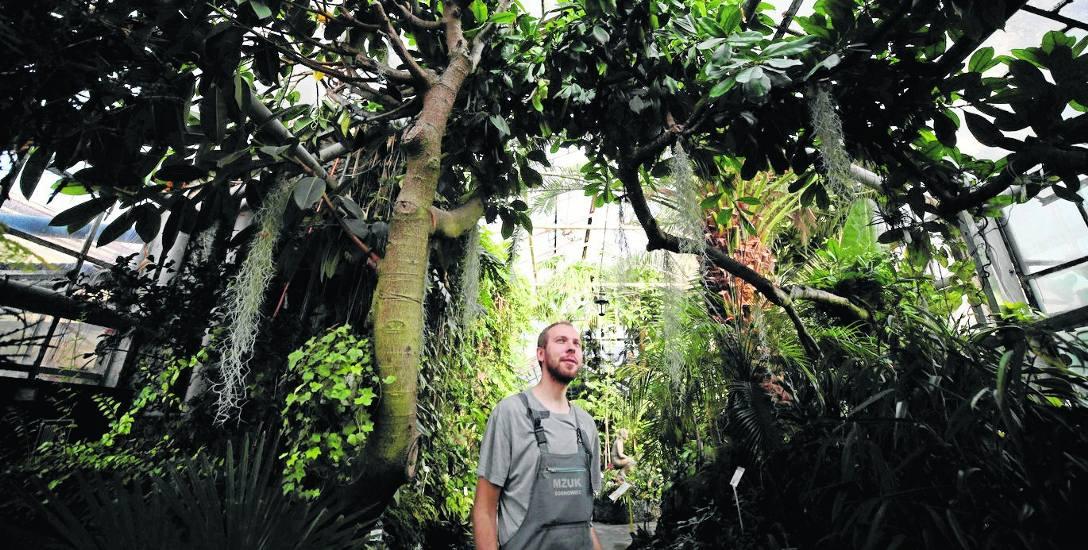 Egzotarium w Sosnowcu otwarto w 1956 roku. Rośnie tutaj ok. 3 tysiące roślin reprezentujących ok. 600 gatunków