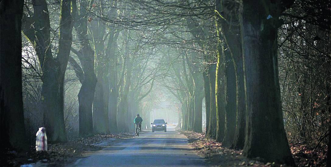 Aleja drzew w Suchej w trakcie jesiennej aury potrafi wyglądać bardzo urokliwie...