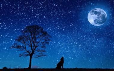 Zwierzęta mogą urodzić się pod szczęśliwą gwiazdą i posiadają swoje znaki Zodiaku! Sprawdźcie dokładnie kiedy urodził się wasz pupil i poznajcie jego