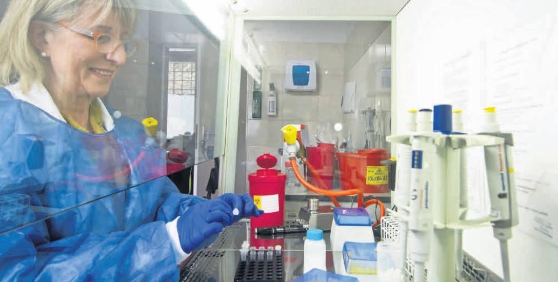 W laboratorium Wojewódzkiej Stacji Sanitarno-Epidemiologicznej w Bydgoszczy można przebadać kleszcze nie tylko na obecność DNA Borrelia spp. w pajęc