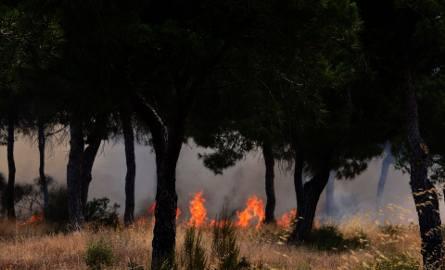 Pożary w Hiszpanii: Ewakuowano ponad 1500 osób, wśród nich są polscy turyści z La Peñuela [ZDJĘCIA]