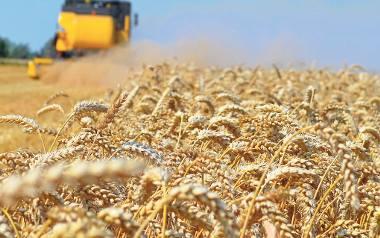Rolnicy w kryzysie po żniwach: zbiory niezłe, ale ceny bardzo niskie