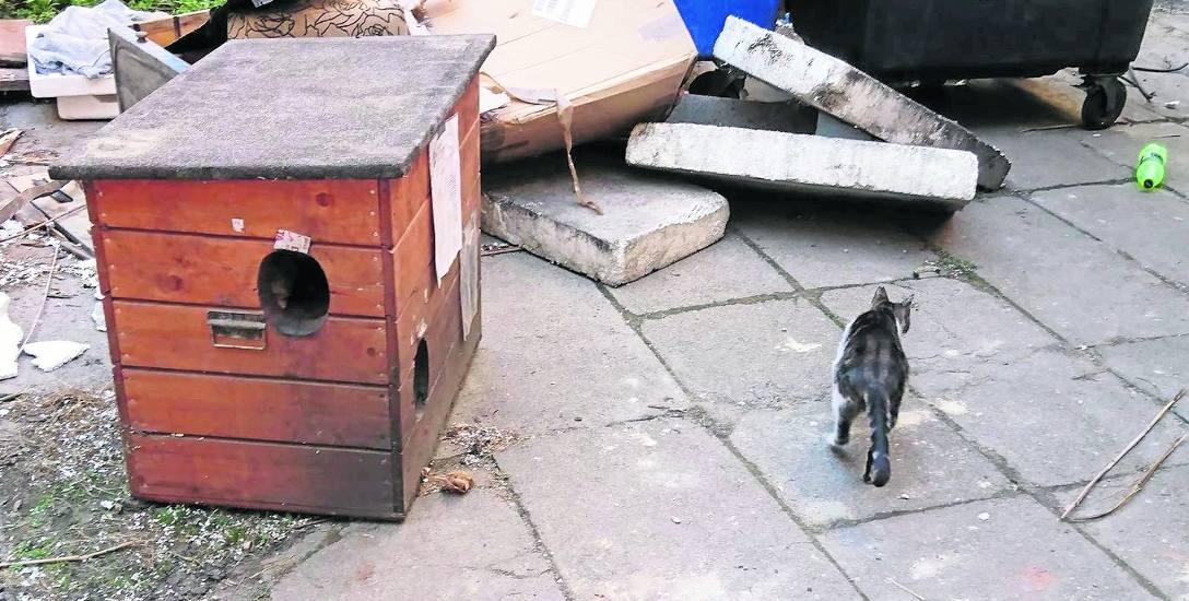 Cztery koty powodem ostrej sąsiedzkiej walki. I tak już od 7 lat