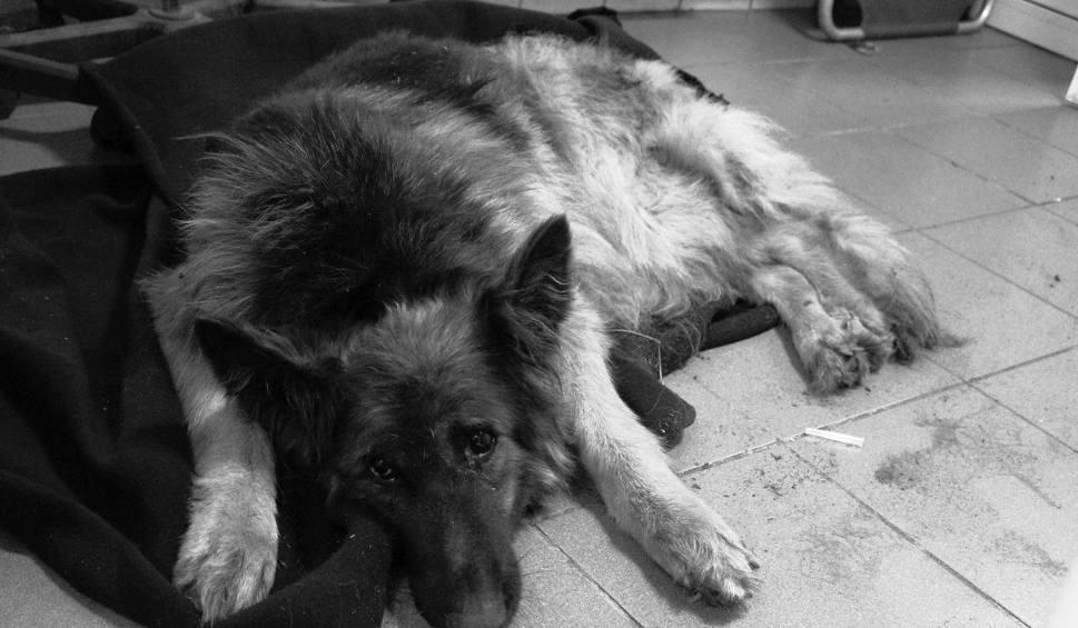Pies zakopany żywcem w Łodzi. Diany nie udało się uratować