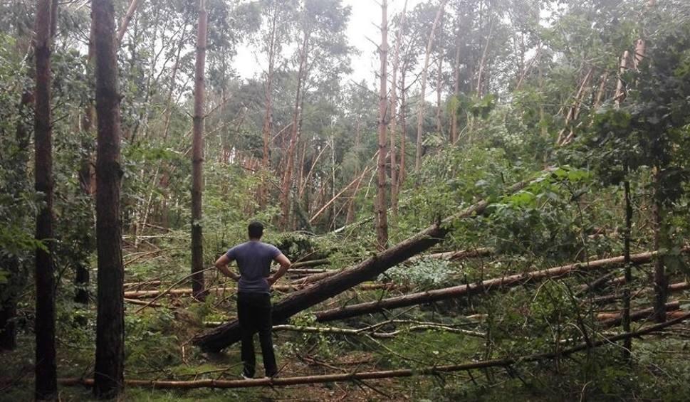 Film do artykułu: Tysiące hektarów zniszczonego lasu. Obowiązują zakazy wstępu