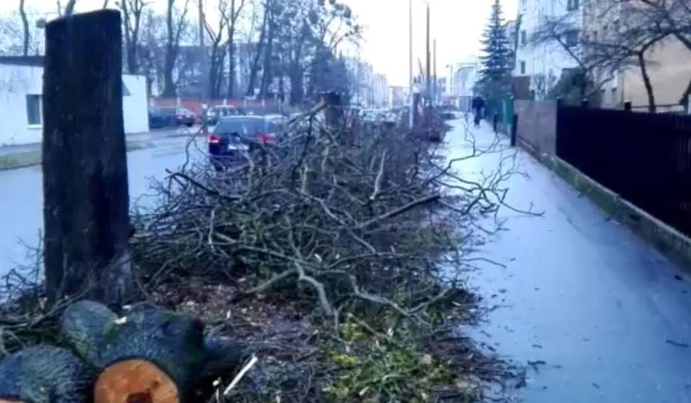 Film do artykułu: Wycinka drzew przy ulicy Antczaka w Toruniu. Ścięto 11 klonów