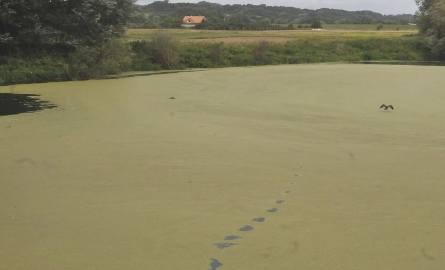 Nowy zielony zakątek dla mieszkańców Fordonu