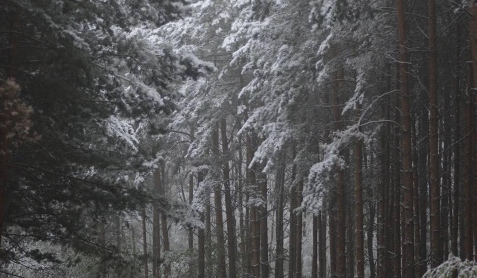 Film do artykułu: Pogoda w Łodzi i regionie na poniedziałek [WIDEO] Sprawdź prognozę pogody dla Polski