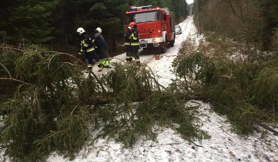 Film do artykułu: Wichury nad Podkarpaciem. Powalone drzewa i mnóstwo interwencji strażaków