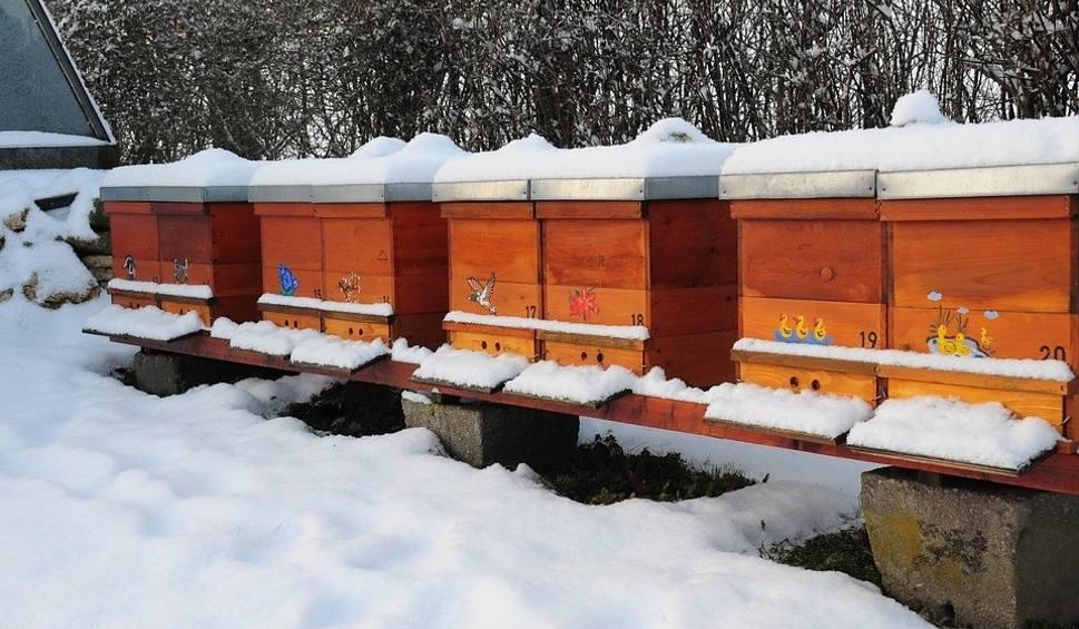 Film do artykułu: Co robią pszczoły zimą? Zadaliśmy to pytanie pszczelarzowi [wideo]