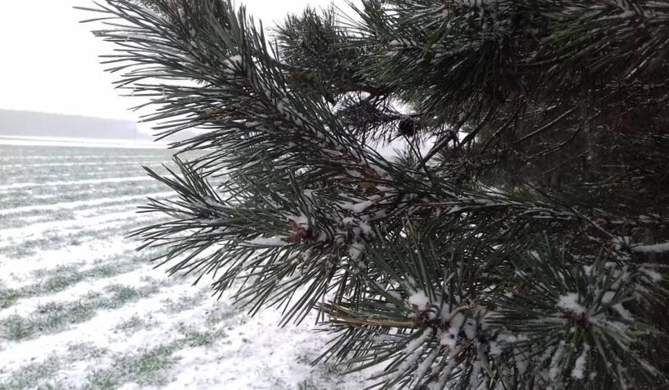 Film do artykułu: Pogoda w Łodzi i regionie. Spadł pierwszy śnieg [ZDJĘCIA]