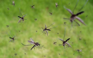 Komary, mrówki, osy, żmije. Co robić, gdy nas ukąszą lub użądlą. Domowe sposoby, leki z apteki. Poradnik