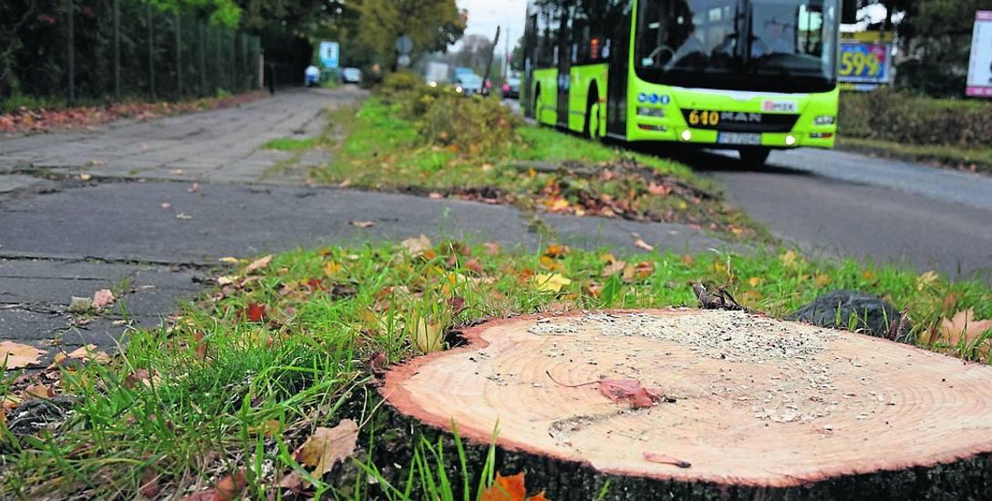 Wycinka drzew przy ul. Kostrzyńskiej ruszyła w październiku, z dużym poślizgiem