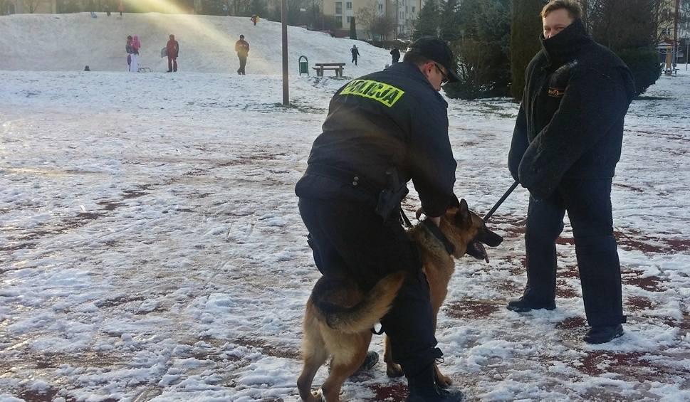 Film do artykułu: Łomża. Stary Rynek. Skate Park. Szkolenie psów służbowych (zdjęcia, wideo)