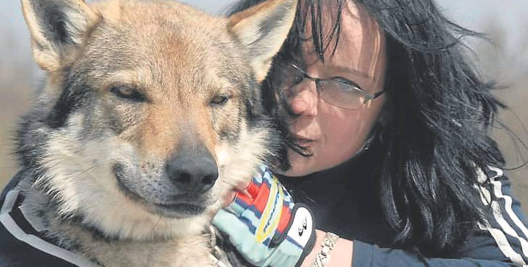 """Małgorzata Peron hoduje wilczaki czechosłowackie od 1998 roku. Aktualnie ma 12 psów. Jej pupile wystąpiły w serialu """"Wataha"""", teledysku grupy Behemot"""